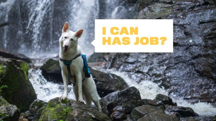 Visit North Carolina First Dog Travel Agent